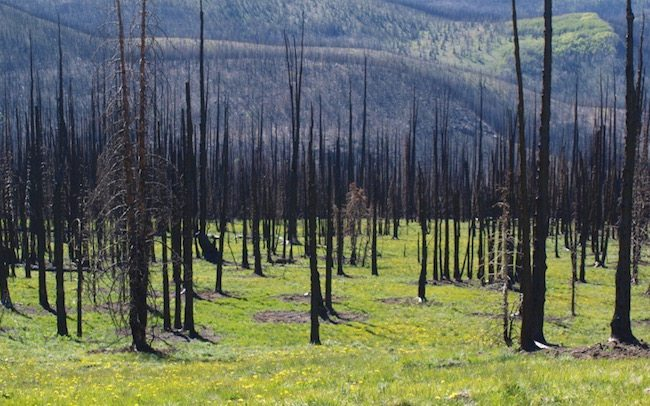 After Forest Fire Photo