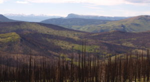 image of forest fire in san juans