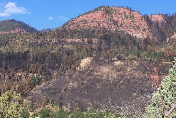 Photo of post 416 fire burn area near Hermosa
