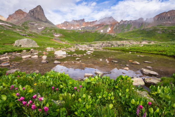 Photo of wildflowers in Ice Lake Basin by Jason Hatfield