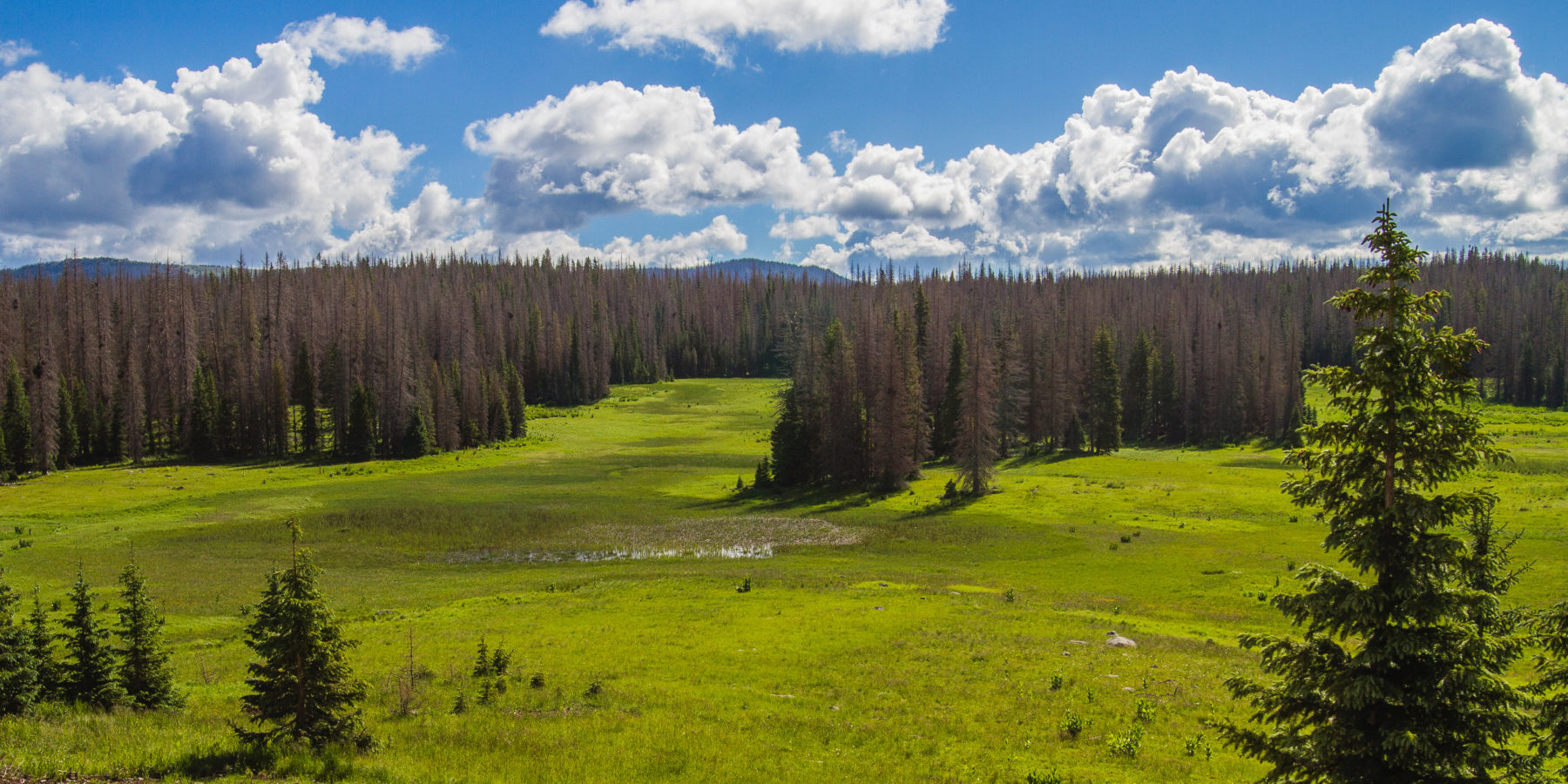 Future home of would-be Village at Wolf Creek