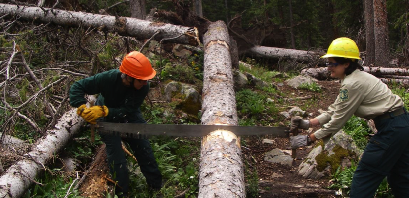 Clearing trails with a crosscut saw